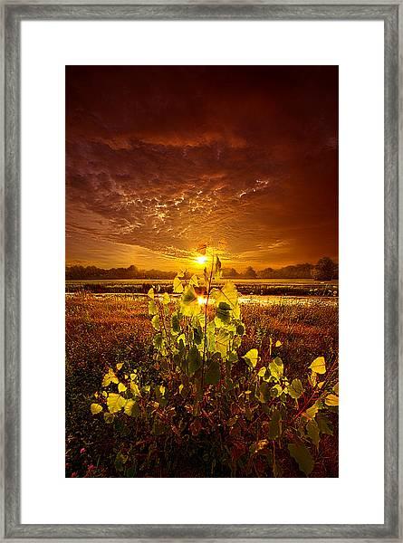 Summer Dreams Drifting Away Framed Print