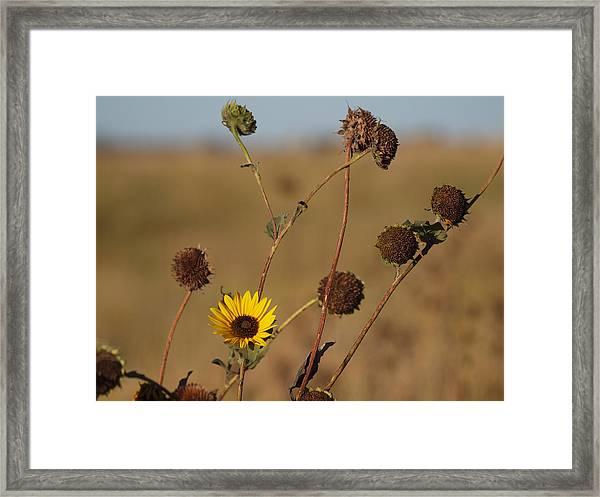 Summer Ends Framed Print