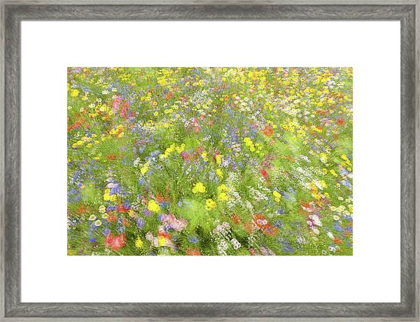 Summer Field Flowers.......... Framed Print