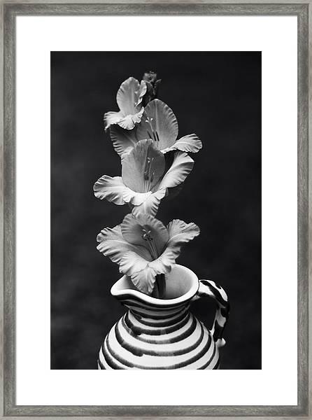 Summer Glads Framed Print