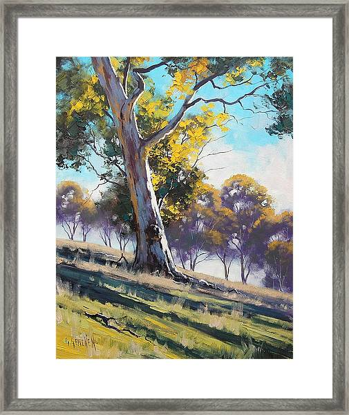 Summer Light Framed Print