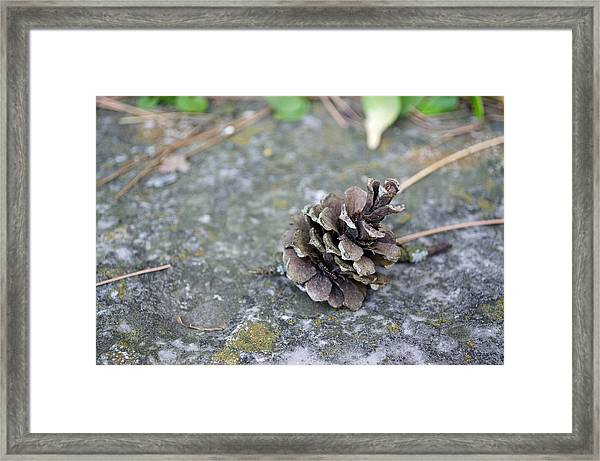 Summer Pinecone Framed Print