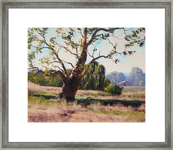 Summer Willow Framed Print
