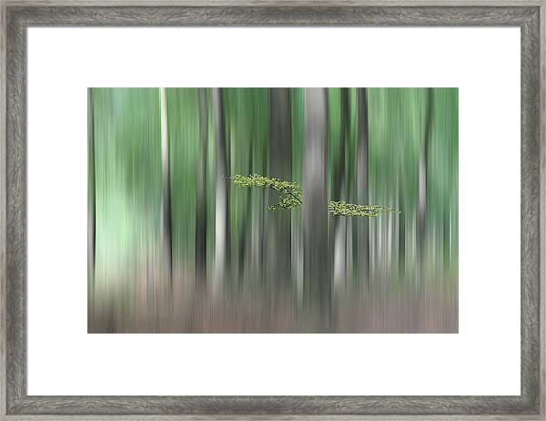 Summermorning Framed Print by Huib Limberg