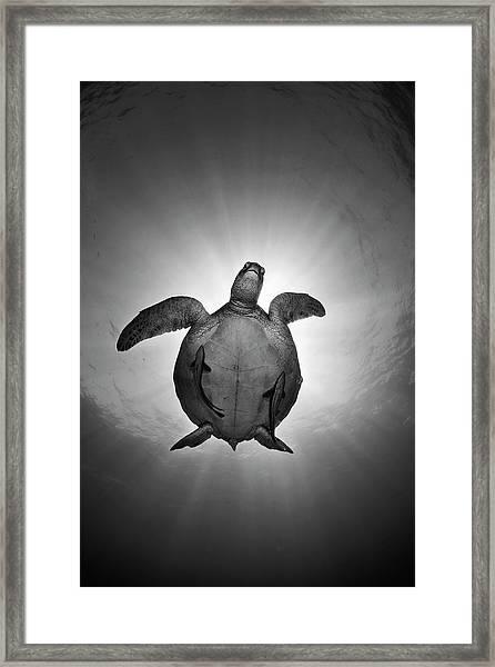 Sun Framed Print by Andrey Narchuk