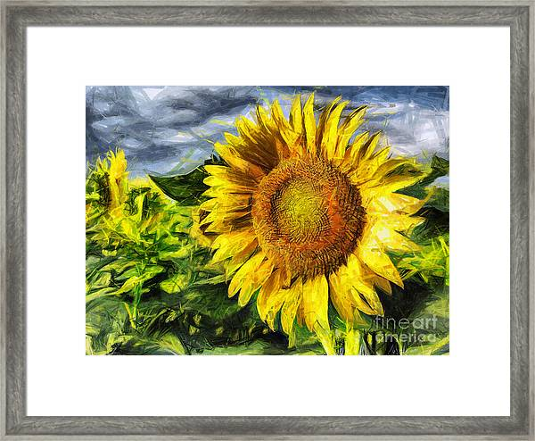 Sunflower Drawing  Framed Print