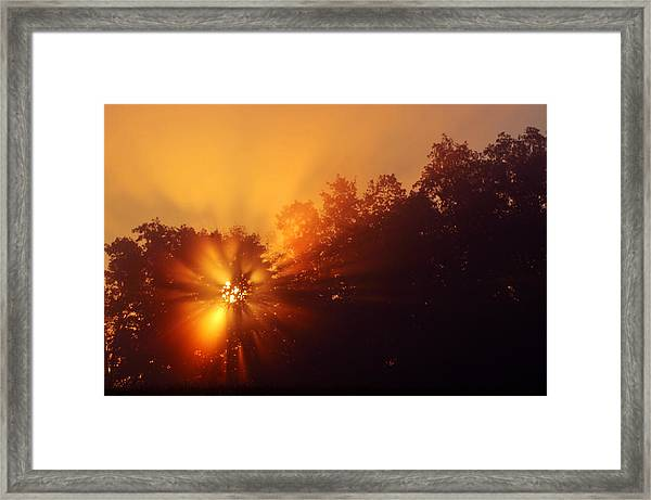 Sun Fog Trees-1 Framed Print