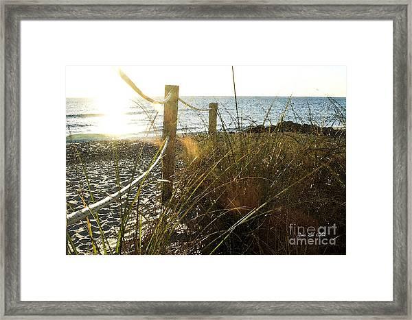 Sun Glared Grassy Beach Posts Framed Print