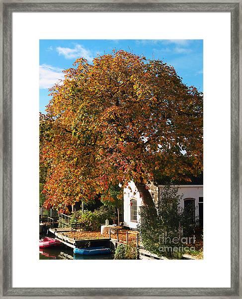 Sun Leaves Framed Print