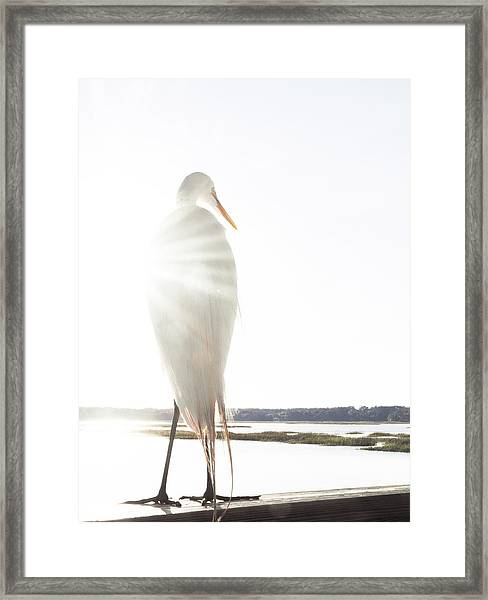 Sun Perch Framed Print