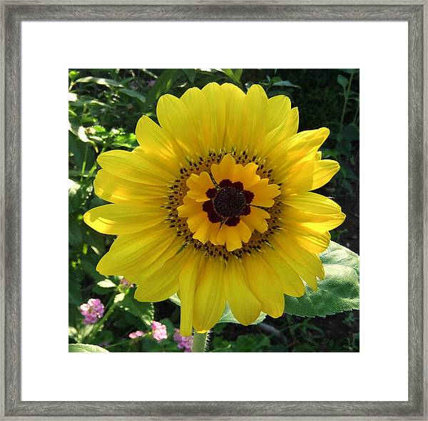 Framed Print featuring the photograph Sun Spot by Eric Kempson