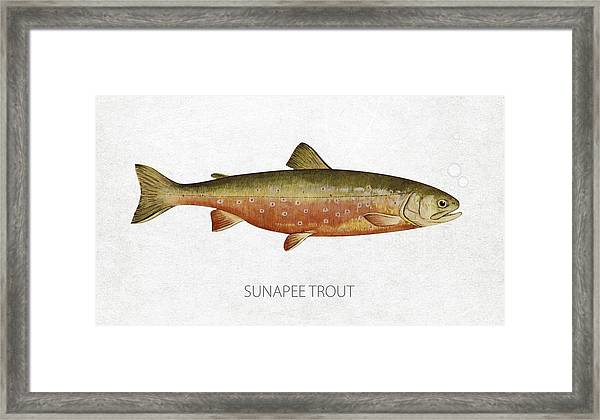 Sunapee Trout Framed Print