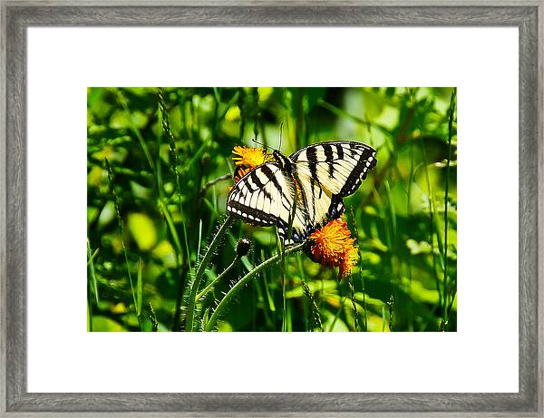 Sunbathing Framed Print by RockyBranch Dreams