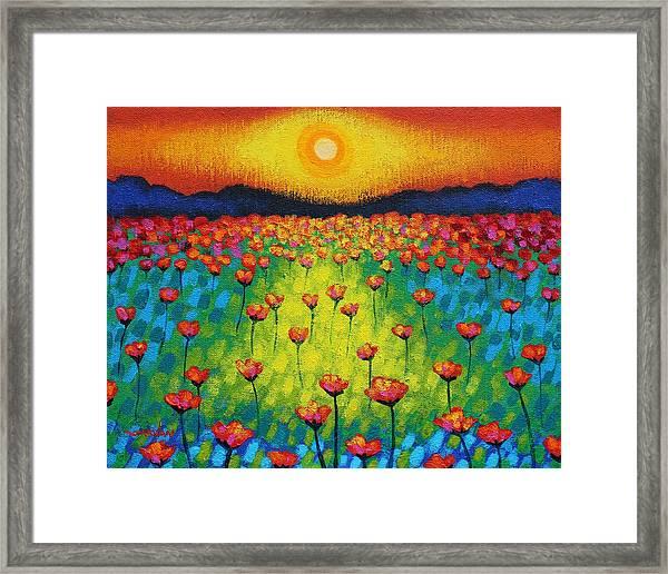 Sunburst Poppies Framed Print