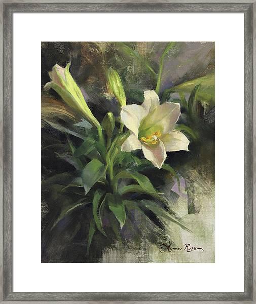 Sunday's Lily Framed Print
