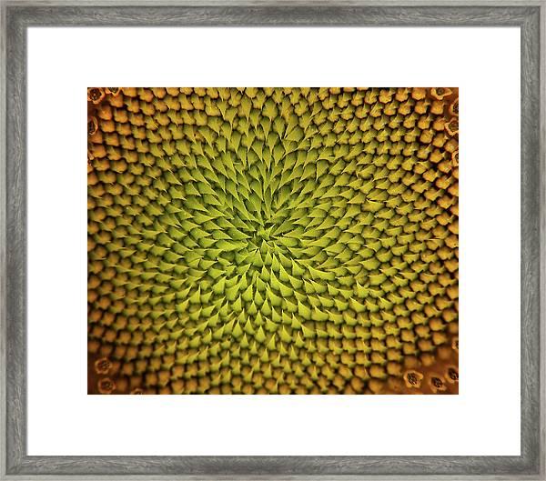 Sunflower Sundial Framed Print