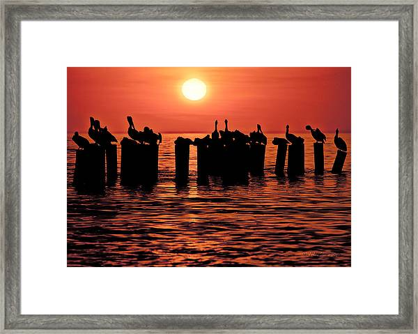 Sundown With Pelicans Framed Print