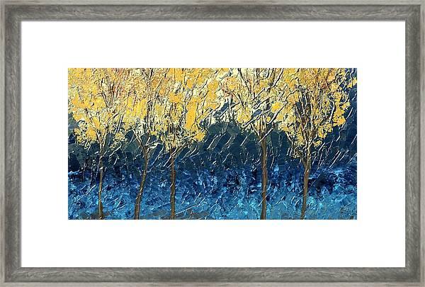 Sundrenched Trees Framed Print