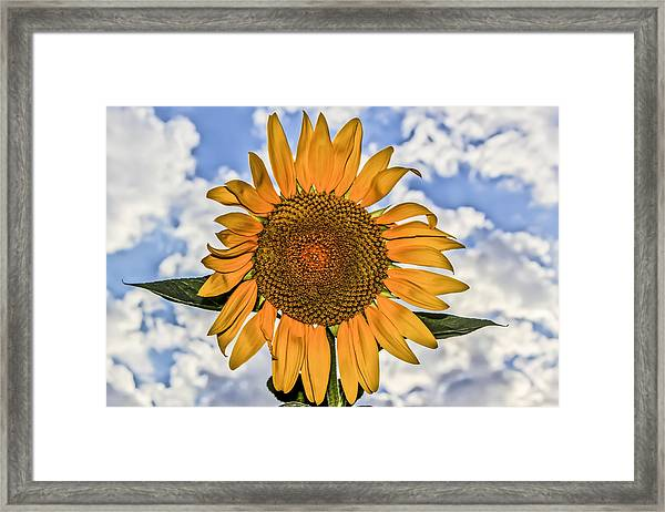 00008 Sunflower And Clouds Framed Print