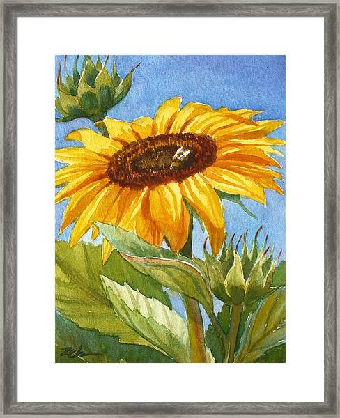 Sunflower And Honey Bee Framed Print