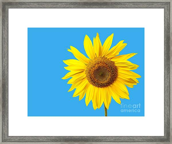 Sunflower Blue Sky Framed Print