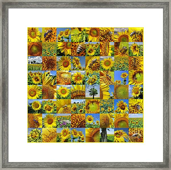 Sunflower Field Collage In Yellow Framed Print