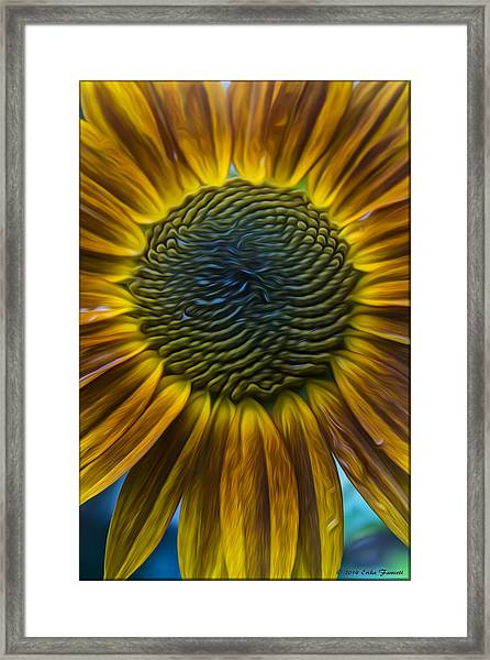 Sunflower In Rain Framed Print