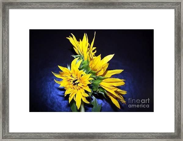 Sunflower Portrait Framed Print