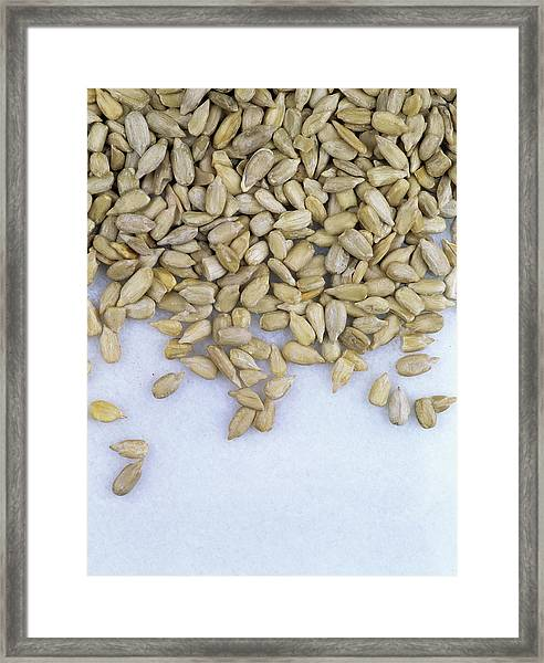 Sunflower Seeds (helianthus Annuus) Framed Print