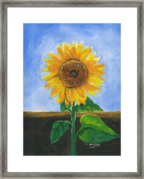 Sunflower Series Two Framed Print