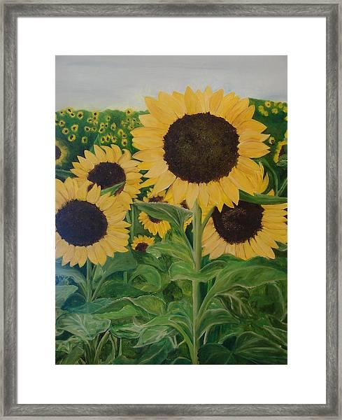 Sunflower Trail Framed Print by Shiana Canatella