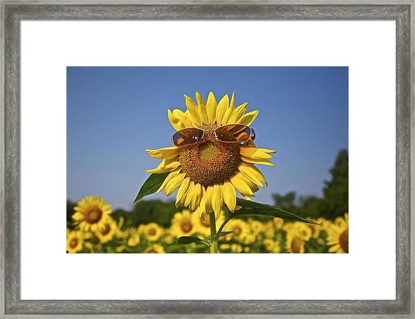 Sunflower With Sunglasses Framed Print