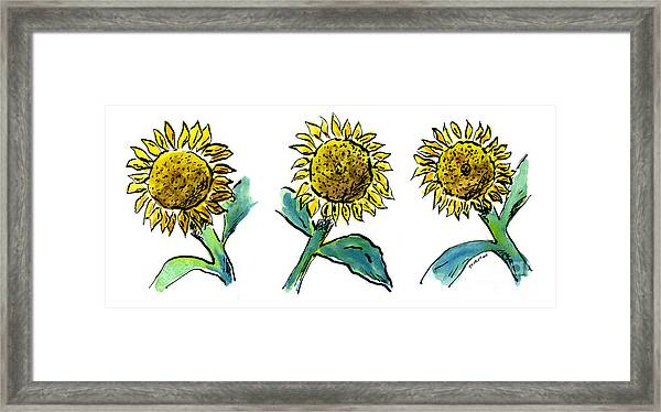 Sunflowers Trio Framed Print