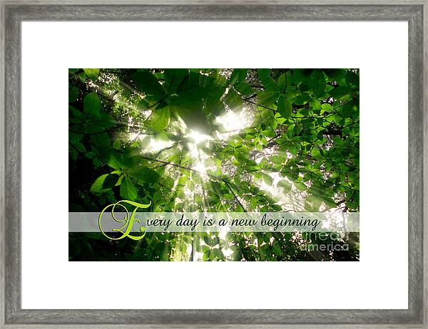Sunlight Streaming Through Leaves Trees In A Forest Framed Print