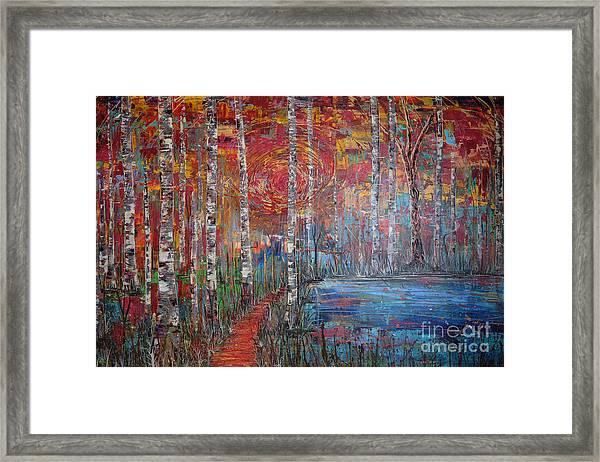 Sunlit Birch Pathway Framed Print