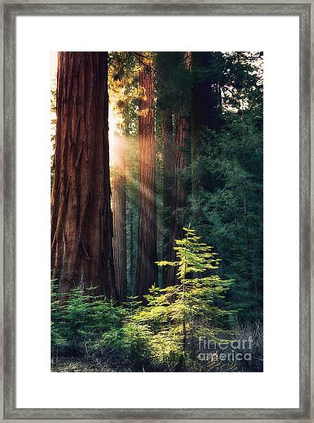 Sunlit From Heaven Framed Print