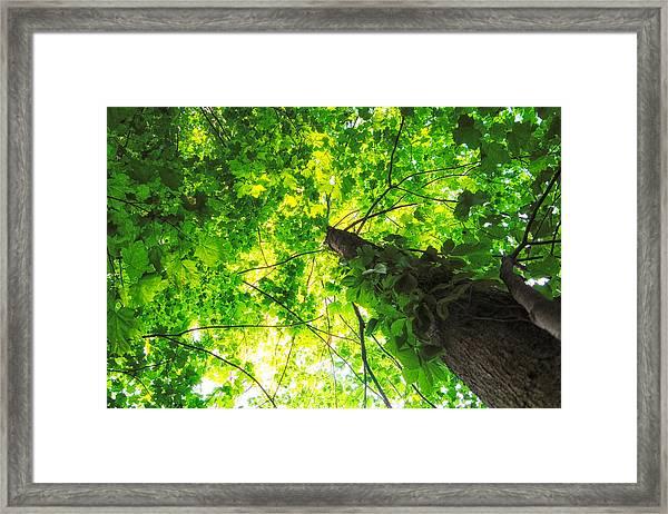 Sunlit Leaves Framed Print
