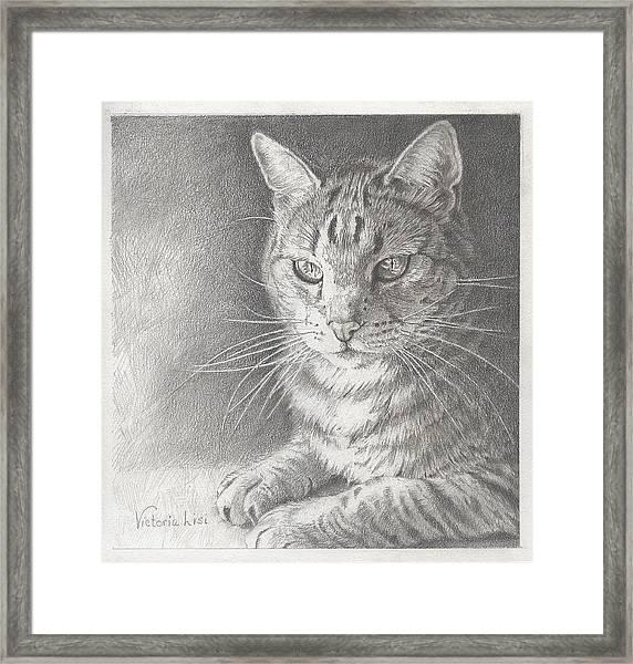Sunlit Tabby Cat Framed Print