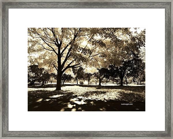 Sunny October Framed Print