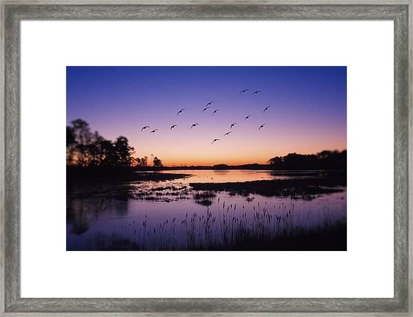 Sunrise At Assateague - Wetlands - Silhouette  Framed Print by SharaLee Art