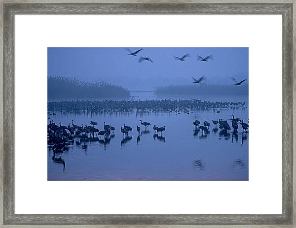 Sunrise Over The Hula Valley Israel 4 Framed Print
