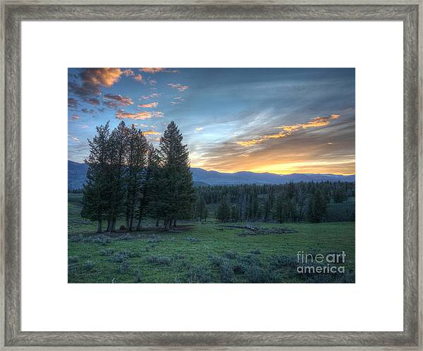 Sunrise Behind Pine Trees In Yellowstone Framed Print