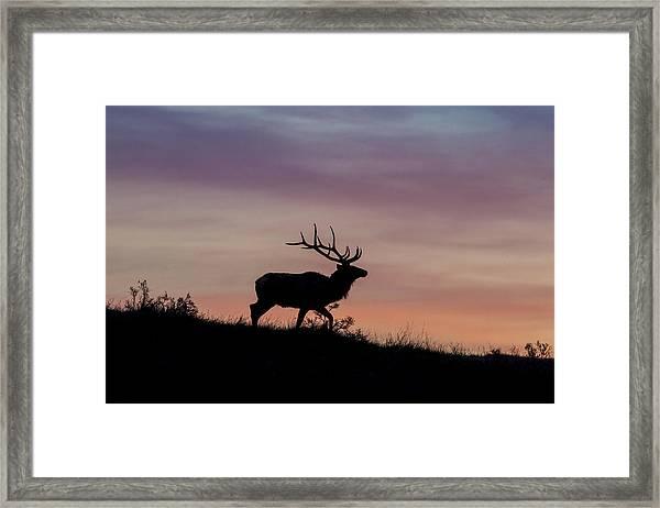 Sunrise Bull Framed Print