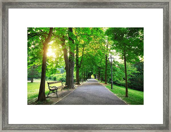 Sunrise In A Green Park Framed Print by Borchee