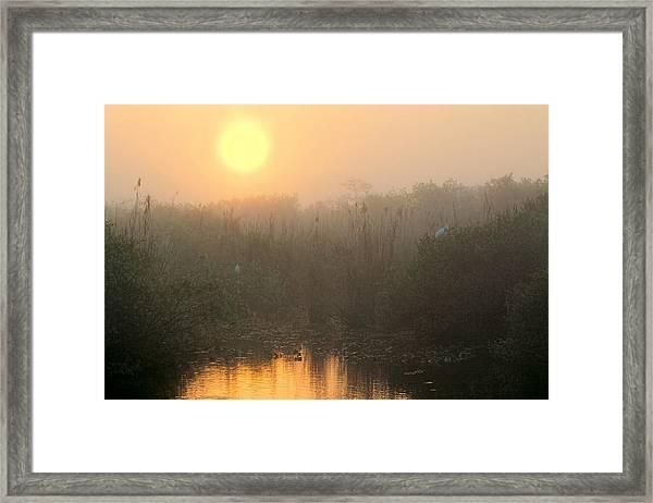 Sunrise In The Everglades Framed Print