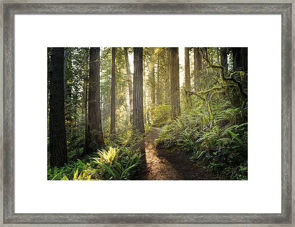 Sunrise In The Redwoods Framed Print by HadelProductions