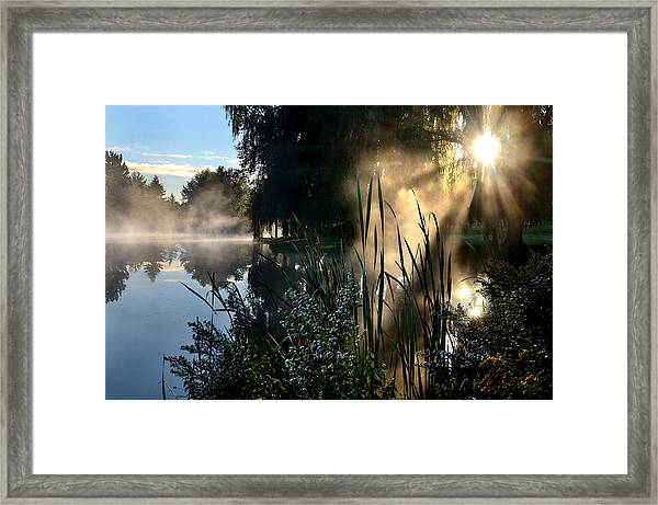 Sunrise Mist At A Marsh Framed Print