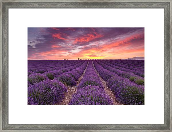 Sunrise Over Lavender Framed Print