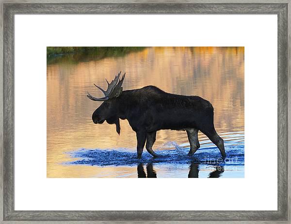 Sunrise Stroll Framed Print