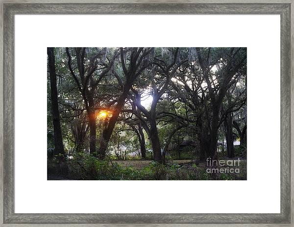 Sunrise Through The Oaks Framed Print
